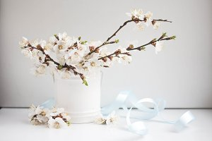 vase with blooming apricot branches