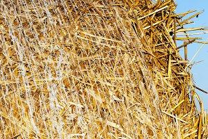 dry yellow straw