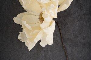 Single faded coral charm paper dahlia