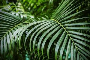Green tropical palm leaves backgroun