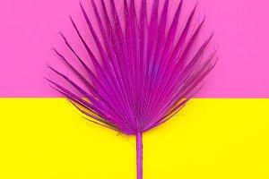 Fashion palm Leaf. Pink Paint.