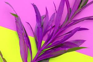 Paint purple plant. Minimal fashion