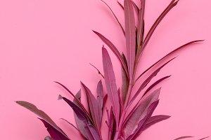 Plant on pink. Minimal fashion desig