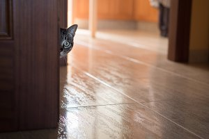 Cat hidden behind a door