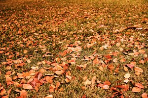 Autumn leaves on grass in the garden