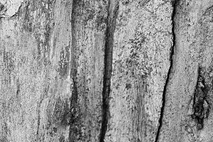 Wood Texture in Black and White
