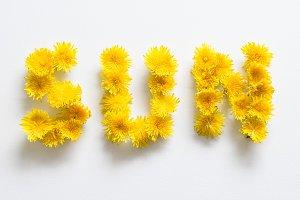 "SALE! Dandelions forming ""sun"""
