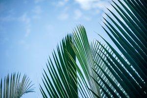 Vivid Green Branches