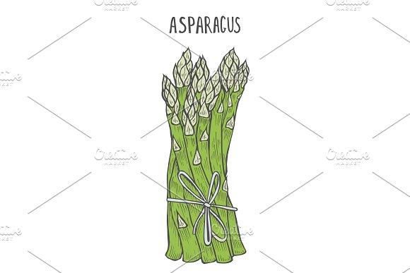 Hand Drawn Asparagus
