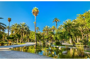 Palmeral of Elche, Spain. UNESCO heritage site