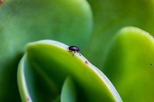 Tiny bug on a leaf