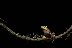 Black background frog
