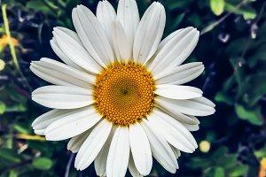 Daisy Flower smiling.