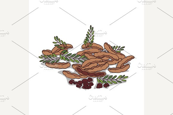 Isolated Clipart Tamarind