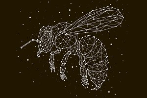 constellation bee star