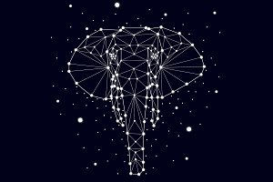 Constellation elephant