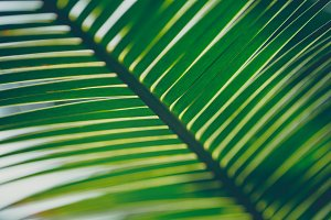 Tropical green leaves plants