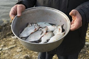 Fisherman holds a bowl with fish