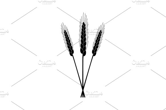 Ears Of Wheat Icon Vector