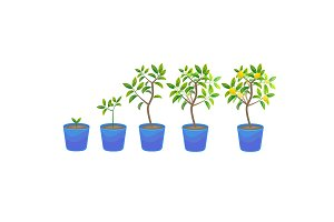 Plant Growing Lemon Tree in Pot