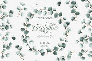 Watercolor Eucalyptus Clip Art