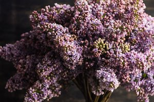 Lilac flowers in bunch spring card