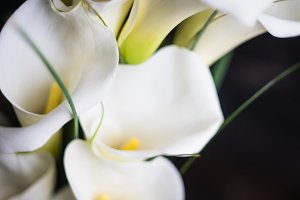 White calla lillies in bunch