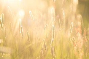 Hayfield in evening sun