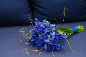 Blue iris flowers in spring bunch