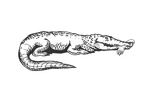 Alligator with hand engraving vector illustration