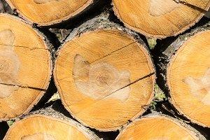 texture of birch logs