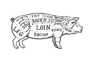 Meat diagram pig engraving vector