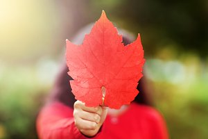 Canada Day picture of red maple leaf