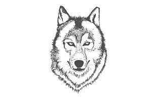 Wolf, hand drawn, sketch, vector