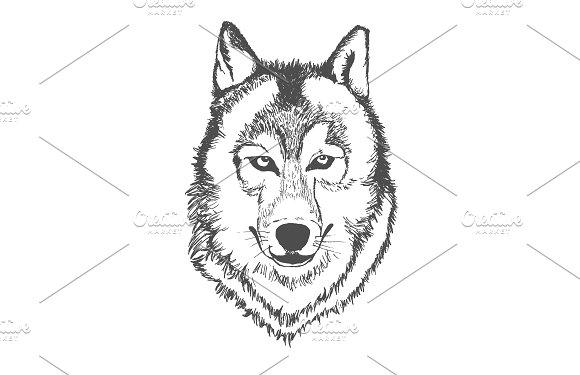 Wolf Hand Drawn Sketch Vector