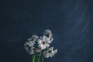 Daisies on vintage books