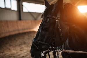 horse stables close up with sunlight