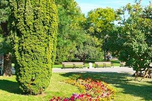 Green sunny garden in city park