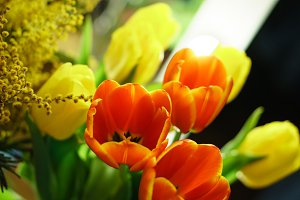 Bouquet of tulips and mimosa