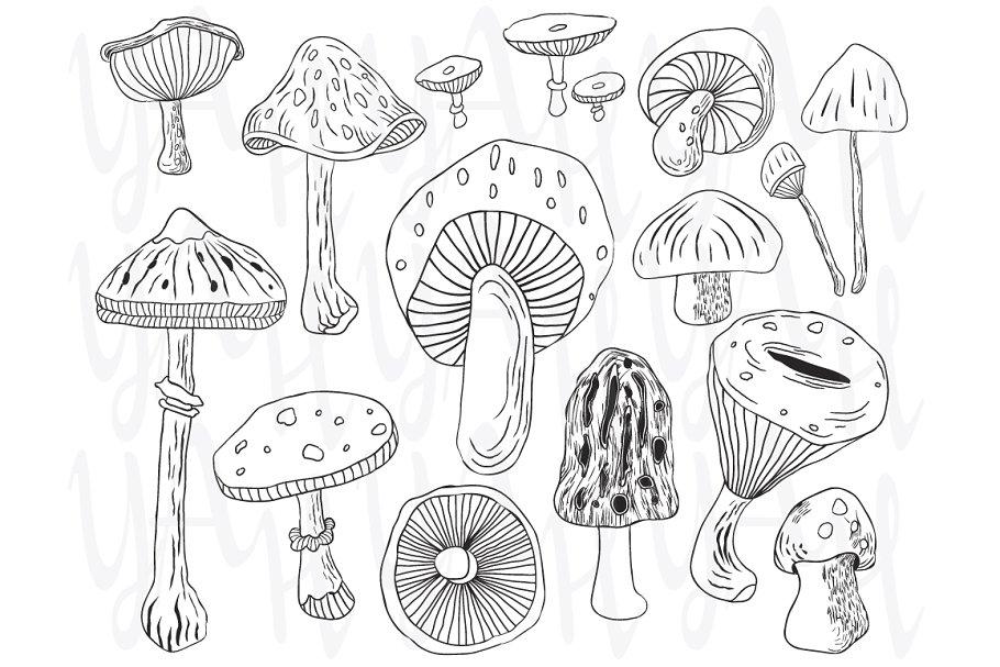 Hand Draw Mushroom Set