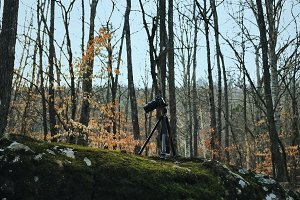 DSLR Camera on Tripod in Forest