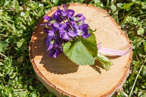 Violet Bouquet on a stump. Macro detail of Viola flower.