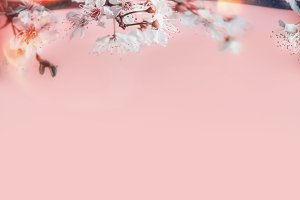 Cherry blossom at pastel pink