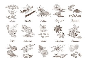 Hand Drawn Natural Spices Set