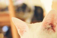 Close up of cute cat