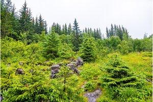 Forest near Voringsfossen waterfall - Norway