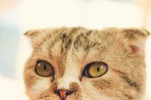 Close up of cute cat head