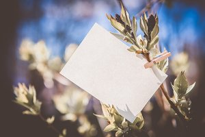 White card on green leaves background