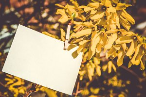 White card on yellow flowers bush background.