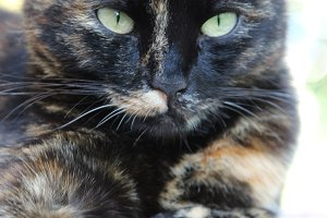Close-up portrait of a beautiful cat